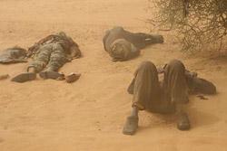 Med peščenim viharjem tudi kamele mižijo